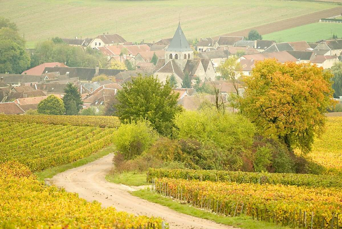 Vineyards in autumn near the Champagne producing town of Avirey Lingey in the Aube region of Champagne in this 2007 photo.