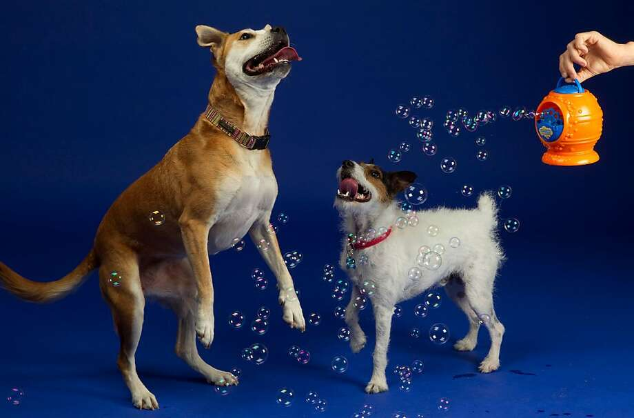 Bubbletastic Dog Bubble Machine (Bubbletastic, $26). Who will be more fascinated by the bacon-scented bubbles: the human or the dog? Batteries not included. activedogtoys.com. Photo: Activedogtoys.com