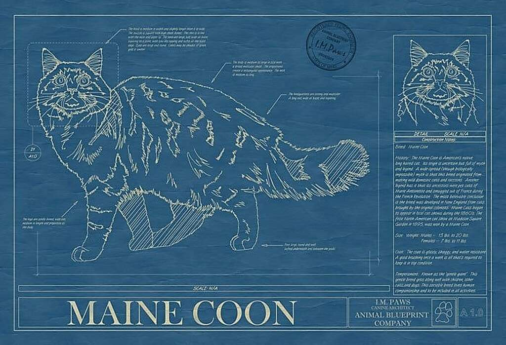 Five quirky finds for pet lovers sfgate pet blueprint animal blueprint co 110 the 18 by malvernweather Image collections