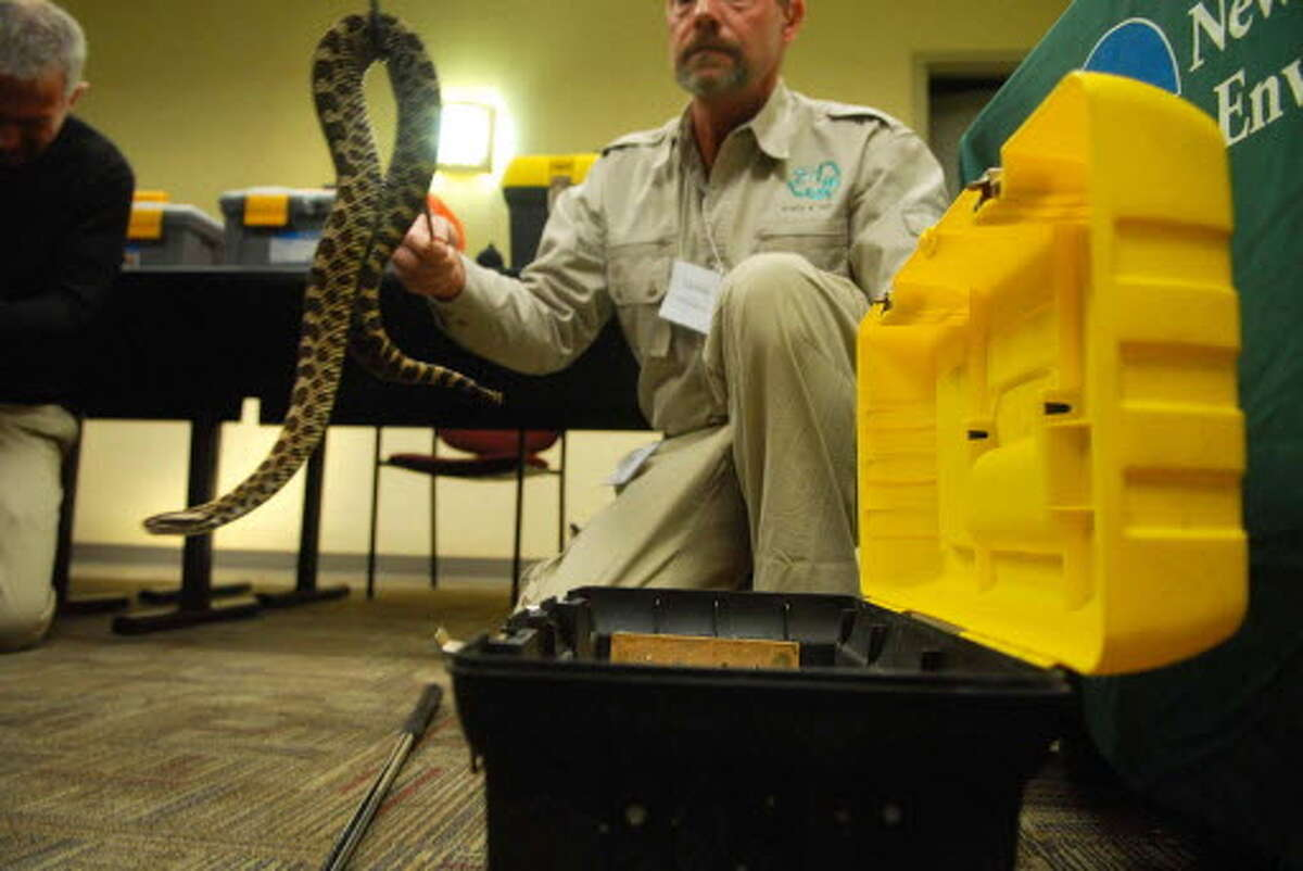 Tom Hudak, who runs Scales and Tails, and wildlife education business, displays a massassauga rattlesnake at DEC headquarters on Broadway in Albany, NY on Thursday, March 19, 2009 during a press conference where the DEC announced the results of a extensive undercover investigation into the poaching and smuggling and illegal sale of protected reptiles and amphibians. This snake was poached in Canada and then smuggled into New York by an individual who wanted to trade it for cash and some New York State timber rattlesnakes. The investigation named