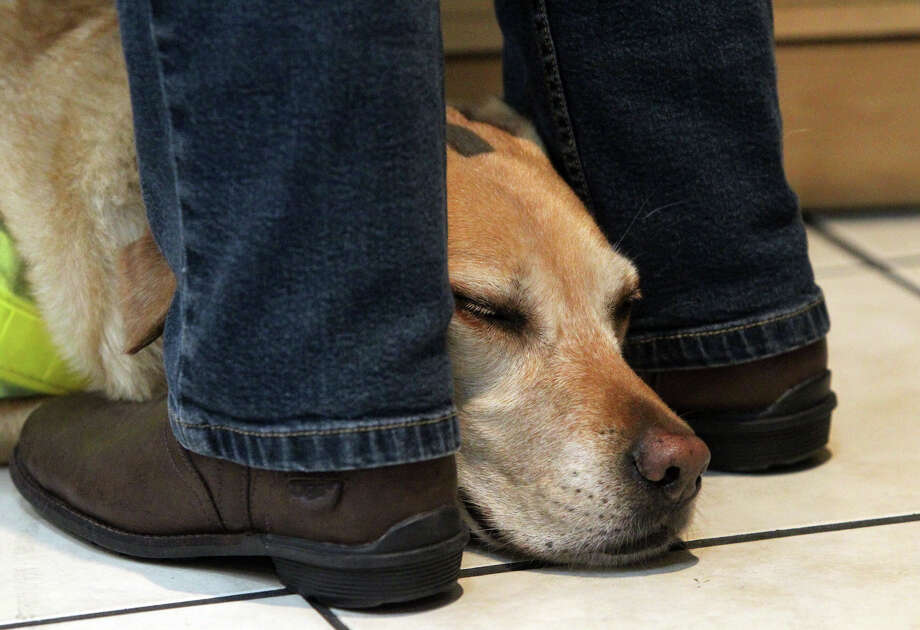 """Bonney"" the guide dog rests while her owner Lou Ann Williams makes a purchase at a store in Downtown San Antonio. Williams is visually impaired and uses ""Bonney"" to get around. (Wednesday December 7, 2011) Photo: JOHN DAVENPORT, San Antonio Express-News / SAN ANTONIO EXPRESS-NEWS (Photo can be sold to the public)"
