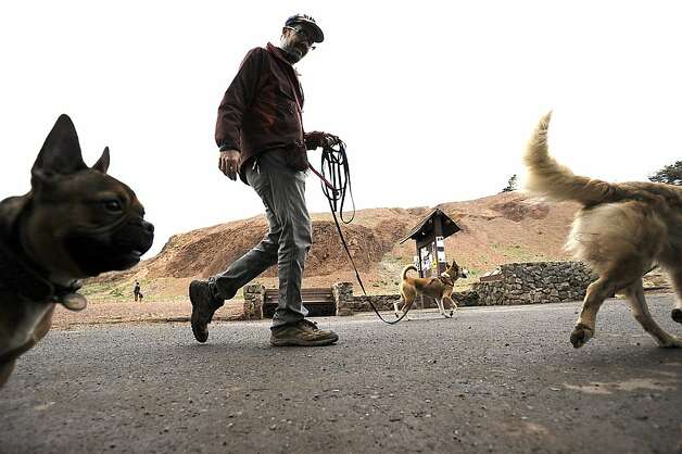 Justin White, a 13 year professional dog walker is seen at Bernal Heights Park in San Francisco San Francisco Monday December 12th, 2011.  Supervisor Scott Wiener is proposing legislation to regulate professional dog walkers by forcing them to be licensed and allowing them to walk only seven dogs at one time. Michael Short/SPECIAL TO THE CHRONICLE Photo: Michael Short, SPECIAL TO THE CHRONICLE