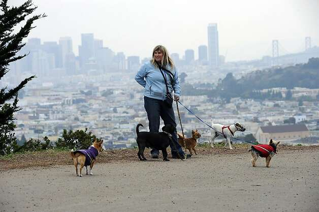 3 year professional dog walker April Meiner of San Francisco said that if the legislation was in place today she would be over the 7 dog cap that is proposed.  San Francisco Supervisor Scott Wiener is proposing legislation to regulate professional dog walkers by forcing them to be licensed and allowing them to walk only seven dogs at one time. Monday December 12th, 2011. Michael Short/SPECIAL TO THE CHRONICLE Photo: Michael Short, SPECIAL TO THE CHRONICLE