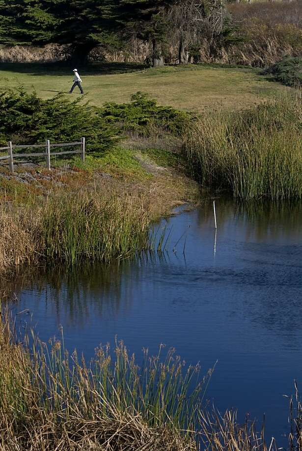 A golfer strolls near Hole 12 at Sharp Park Golf Course in Pacifica, Calif. on Saturday, Dec. 19, 2009.  Golfers and environmentalists are at odds over the 18-hole course at Sharp Park, where two species' aquatic habitats are located - the endangered San Francisco garter snake and the threatened red-legged frog.  Ran on: 12-20-2009 Two protected species live at San Francisco-owned Sharp Park in Pacifica. Photo: Adam Lau, The Chronicle