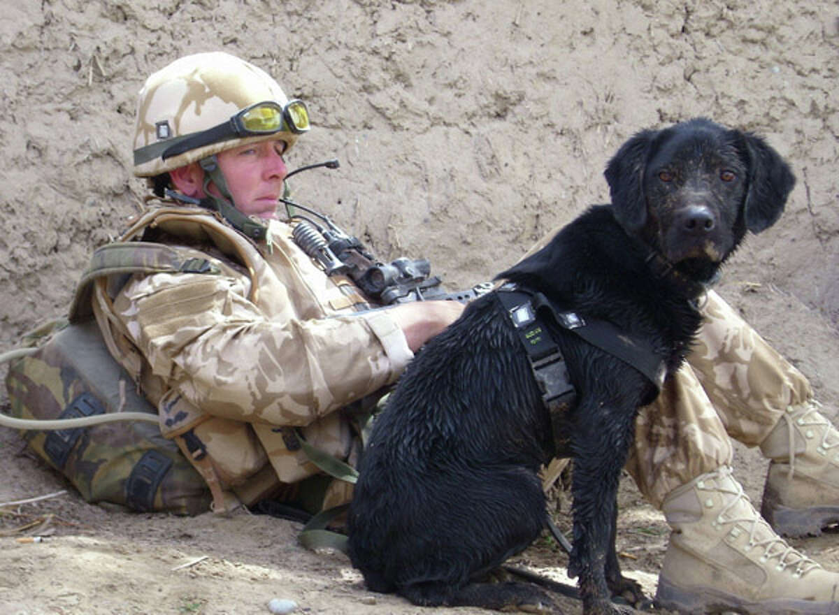 Treo, an 8-year-old black Labrador retriever, sits with Sgt. Dave Heyhoe while searching for Taliban weapons in 2008 in Afghanistan. (Getty Images)