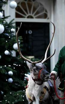 A reindeer is held outside 10, Downing Street, London, before the Chancellor of the Exchequer's annual Christmas party, Wednesday. Photo: Matt Dunham, AP / AP