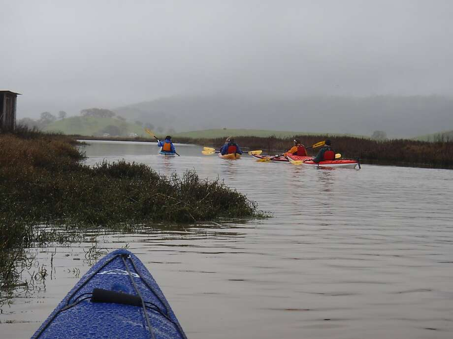 Paddling south into Petaluma Marsh connects you to the Napa-Sonoma Marsh Wildlife Area and 50,000 acres of tidal wetlands that are habitat for birds and wildlife. Photo: Jeff Kellogg