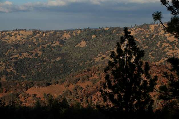 A pine tree is seen silhouetted against a ridge at Henry W. Coe State Park on Tuesday, December 13, 2011 in Morgan Hill, Calif. Photo: Lea Suzuki, The Chronicle