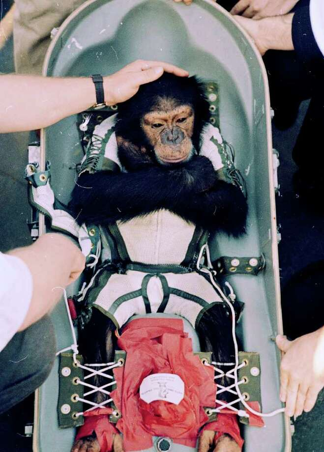 AP FILE CHIMP IN SPACE: In 1961, Ham was the first higher primate launched into outer space in the early phase of America's space exploration. Photo: Anonymous / AP