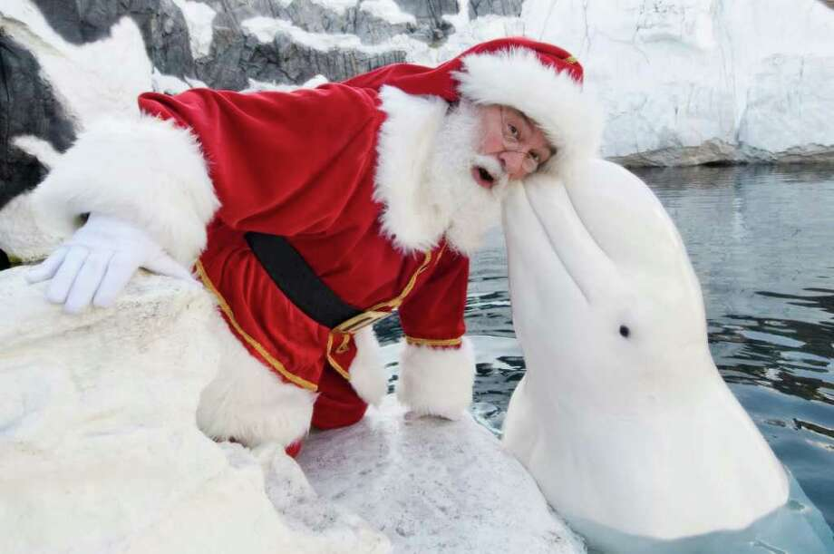 Santa Claus poses with a Beluga Whale at SeaWorld San Diego on December 15, 2011 in San Diego, California. Photo: Handout, Getty / 2011 SeaWorld San Diego