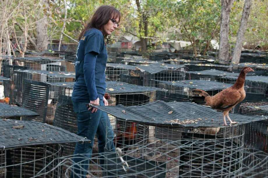 Nicole Paquette,  a Texas Humane Society official, surveys the scene after raid on the Oleander Game Farm in Santa Fe. Photo: Kathy Milani
