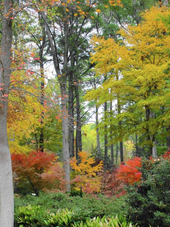 NEW HUES: Cool night temperatures and warm sunny days prompt trees to put on a show. Photo: Greg Grant
