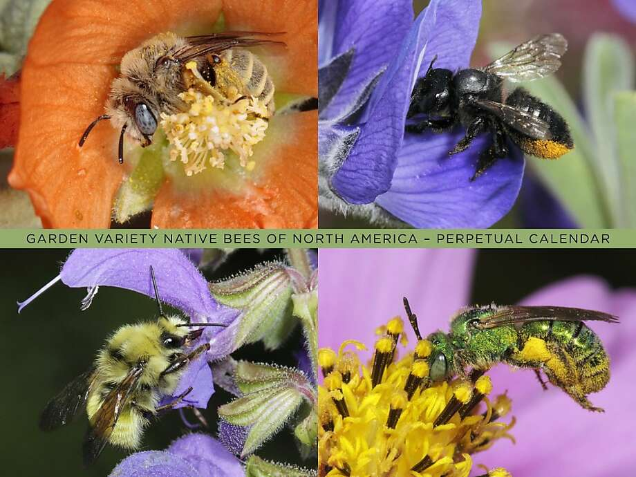Perpetual Bee Calendar Photo: Nativebeedazzled.com