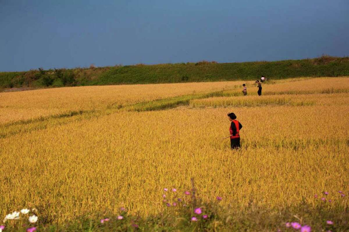 In this Saturday, Oct. 8, 2011 photo, farmers stand in a field outside the eastern coastal city of Wonsan, North Korea. In a landmark shift after three years of tensions, the United States is poised to announce in the coming days its first significant donation of food aid to North Korea _ a small but symbolic offer that is expected to pave the way for long-stalled discussions on dismantling Pyongyang's nuclear program.