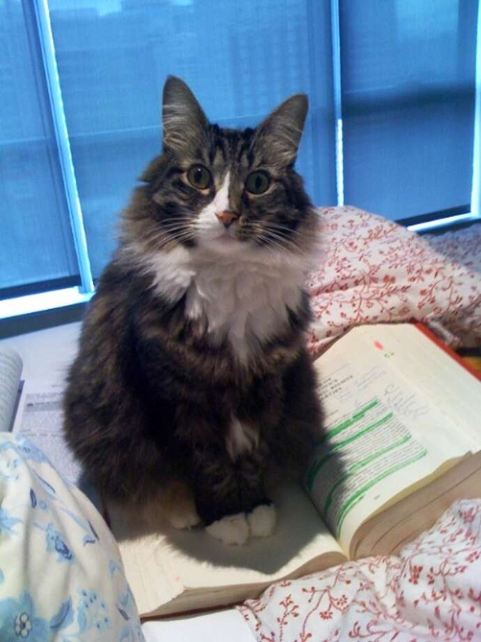 Seattle Cat Is Fine After 11 Story Fall Seattlepi Com