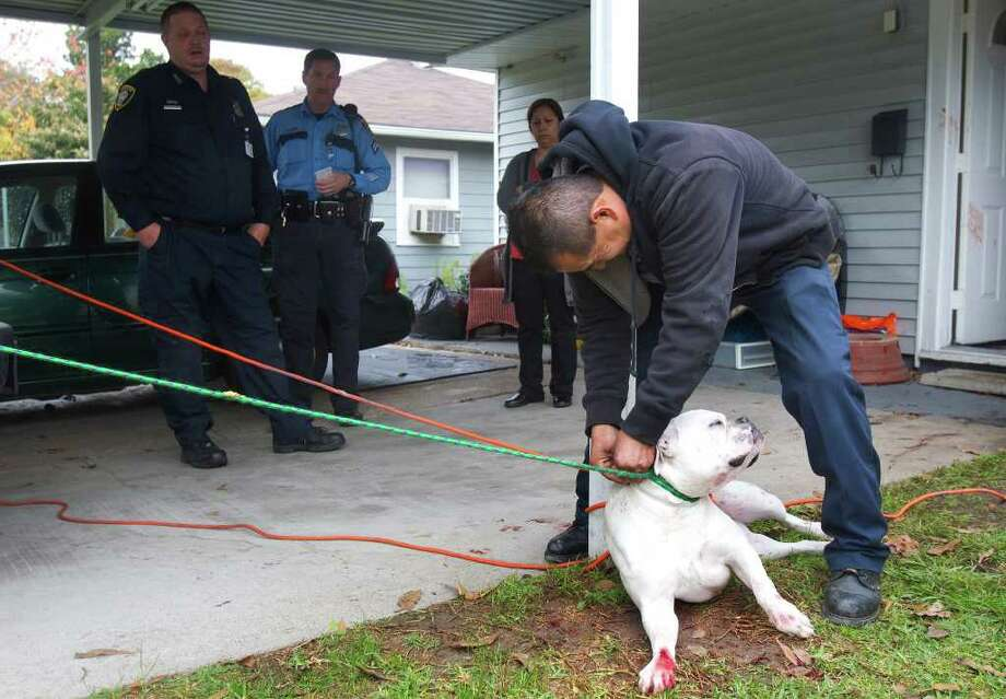An unidentified man prepares his boxer-bull terrier for animal  control after it attacked two women in the 6600 block of Thornwall  Street on Thursday in Houston. (Cody Duty / Houston Chronicle) Photo: Cody Duty, Houston Chronicle / © 2011 Houston Chronicle