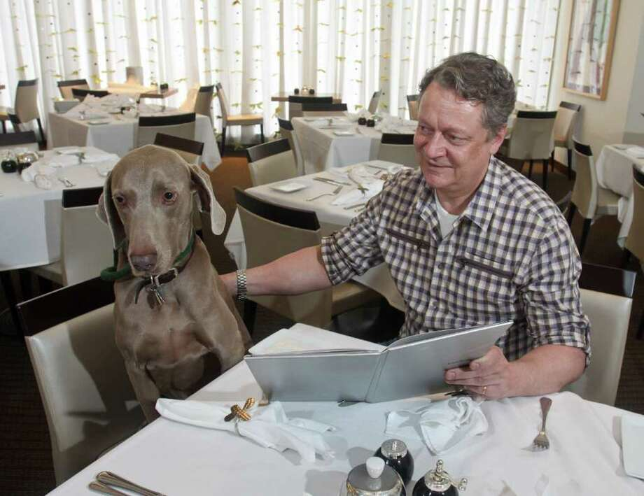 (For the Chronicle/Gary Fountain, December 15, 2011) Mr. Darcy, the Weimaraner belonging to Neiman Marcus restaurant manager Iain Evans, doesn't really order. But Mr. Darcy is an example of the great dogs available for adoption at the SPCA's headquarters or, during the month between Thanksgiving and Christmas, at the Neiman's store window. Photo: Gary Fountain / Copyright 2011 Gary Fountain