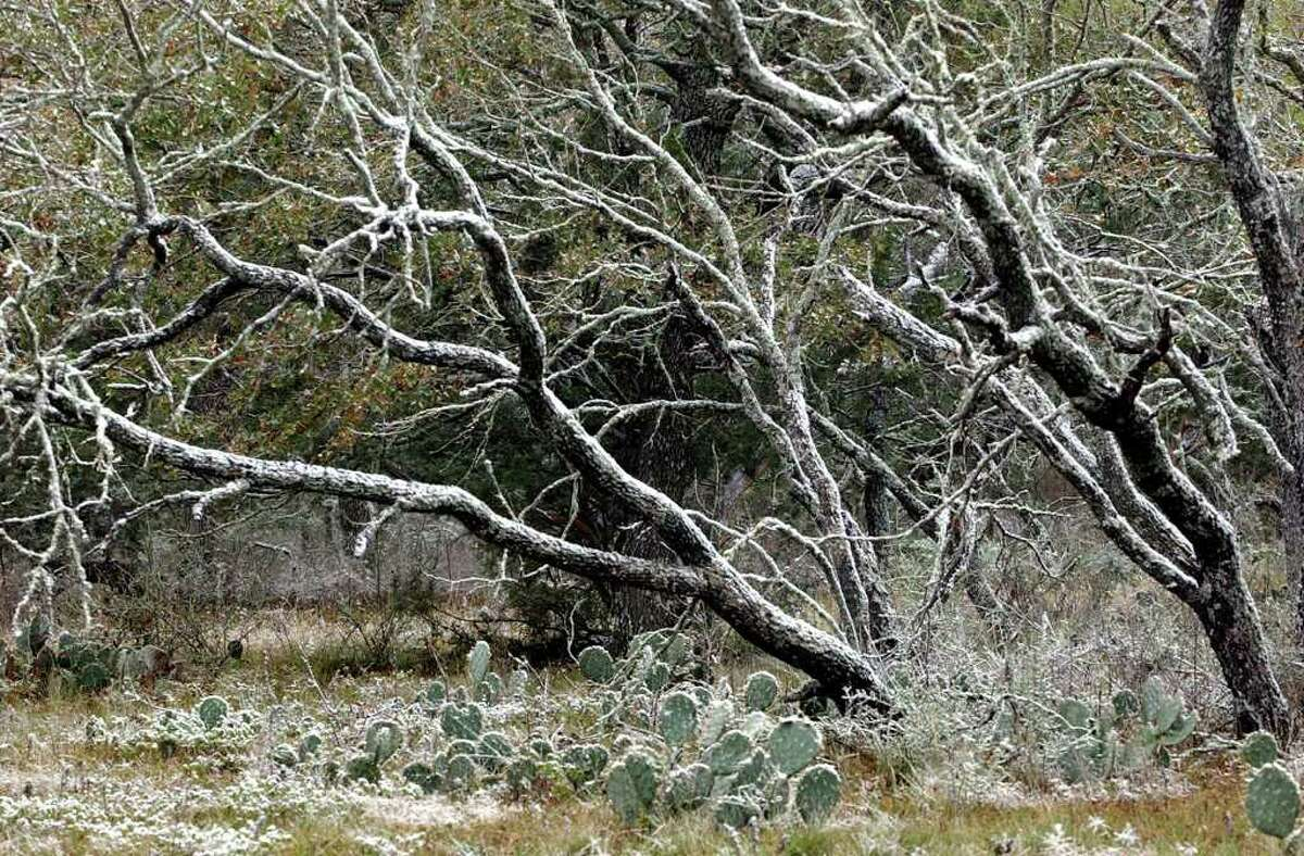 Snow blankets cactus and mesquite trees north of Fredericksburg in 2001. The Hill Country could get light snowfall Christmas Eve morning thanks to a cold front moving through the area tonight and into Saturday morning.