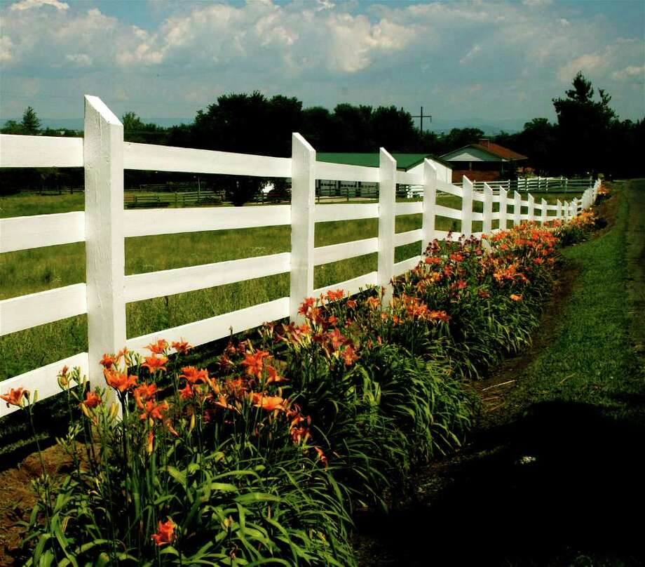 This 2008 image shows day lilies along a rural road near New Market, Va. If you want to ease your garden chores, then choose low-maintenance plants like day lilies that, once established, can be left to fend pretty much for themselves.   (AP Photo/Dean Fosdick) Photo: Dean Fosdick