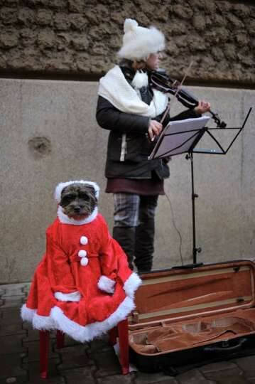 A girl plays violin next to her dog dressed up like Santa Claus in downtown Sofia on December 23, 20