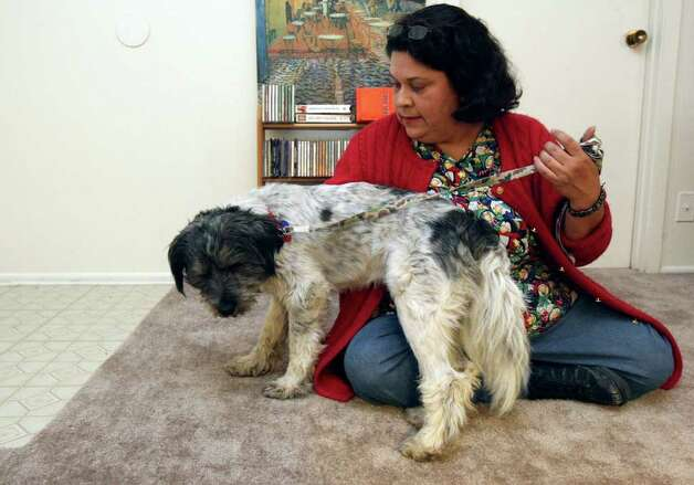 Belinda Gutierrez was reunited with her dog Stevie Oedipus Wonder after ACS volunteers found a listing for him on Craigslist. Photo: HELEN L. MONTOYA, San Antonio Express-News / SAN ANTONIO EXPRESS-NEWS