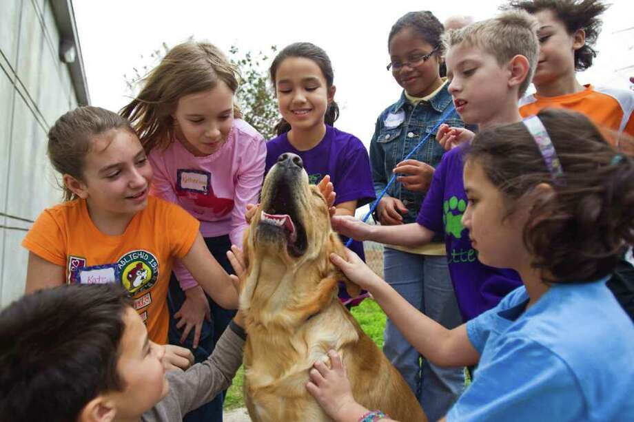 Lucky, a golden retriever mix, shows his appreciation for the love he's getting from children in the SPCA's winter Critter Camp. The camp gives kids hands-on time with dogs, cats and farm animals. Kids learn new facts and do animal-themed crafts and activities. Photo: Nick De La Torre / © 2011  Houston Chronicle