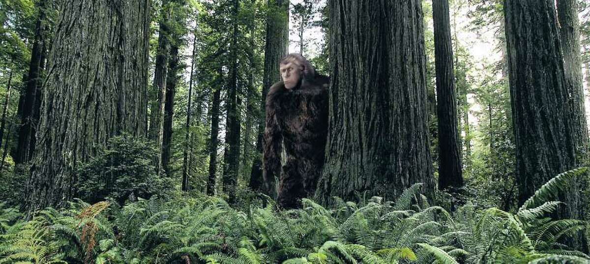 Despite naysayers, some groups call Texas a prime area for hunting the elusive Sasquatch. Robert Wuensche photo illustration \ Houston Chronicle