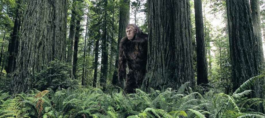 Despite naysayers, some groups call Texas a prime area for hunting the elusive Sasquatch. Robert Wuensche photo illustration \ Houston Chronicle Photo: BRIAN VANDER BRUG / LOS ANGELES TIMES