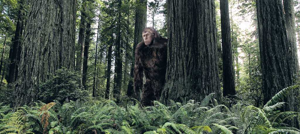 Searching for bigfoot in texas houston chronicle
