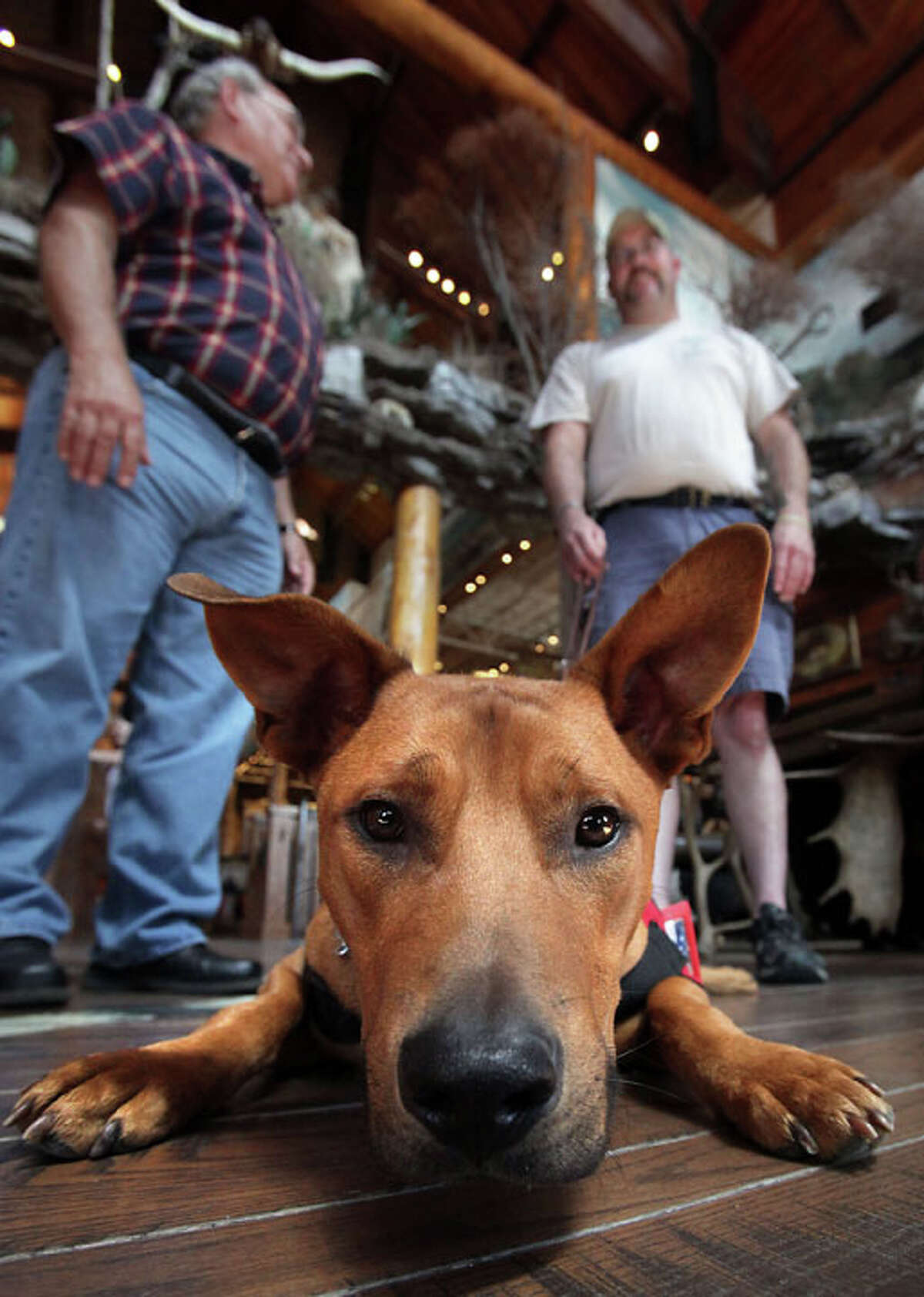 Gunny, a service dog that has been trained to detect potential stressful situations, checks out the camera as he lays on the floor in front of Army Sgt Jeremiah Honaker, left, from TN, who suffers from PTSD. At left is Bart Sherwood, Program Director of Train a Dog, Save a Warrior program. Tuesday, August 9, 2011.