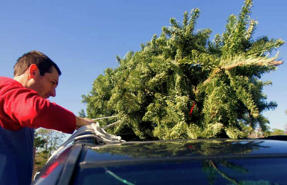 "Greg Dillard unties a Christmas tree before tossing it into a pile of trees to be recycled at Memorial Park Tuesday, Dec. 27, 2011, in Houston. ""We've done this every year,"" he said of the recycling program. Photo: Cody Duty, Houston Chronicle / © 2011 Houston Chronicle"