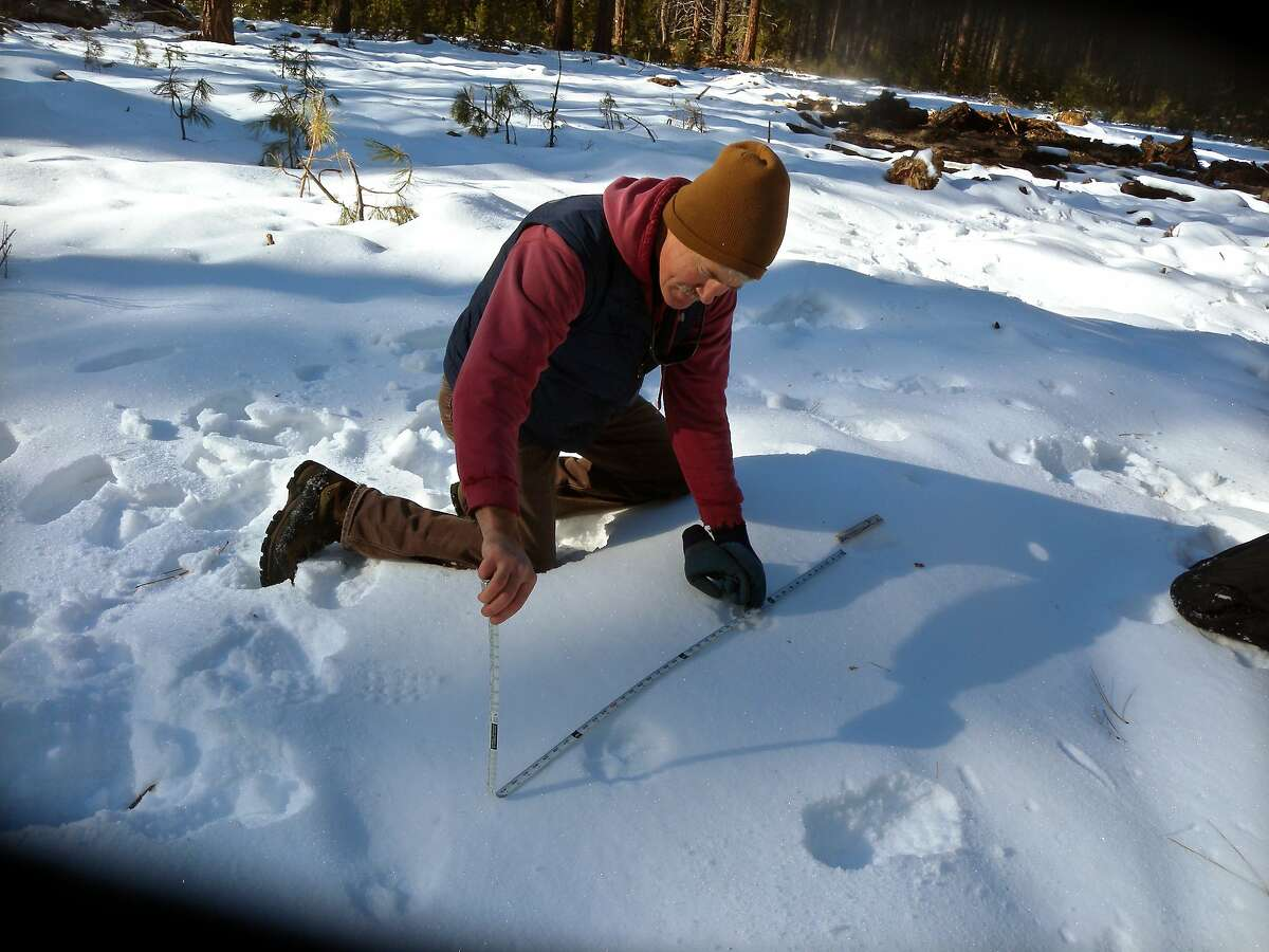 In this Dec. 16, 2011 photo, U.S. Fish and Wildlife biologist John Stephenson uses a tape to calculate the stride of Oregon's epic wanderer, the gray wolf known as OR-7, in the snow south of Crater Lake National Forest, Ore. Stephenson didn't spot him, but found tracks in the snow from a single wolf and the carcass of an injured elk calf that had been fed on. (AP Photo/The Oregonian, Richard Cockle) MAGS OUT; NO SALES; TV OUT