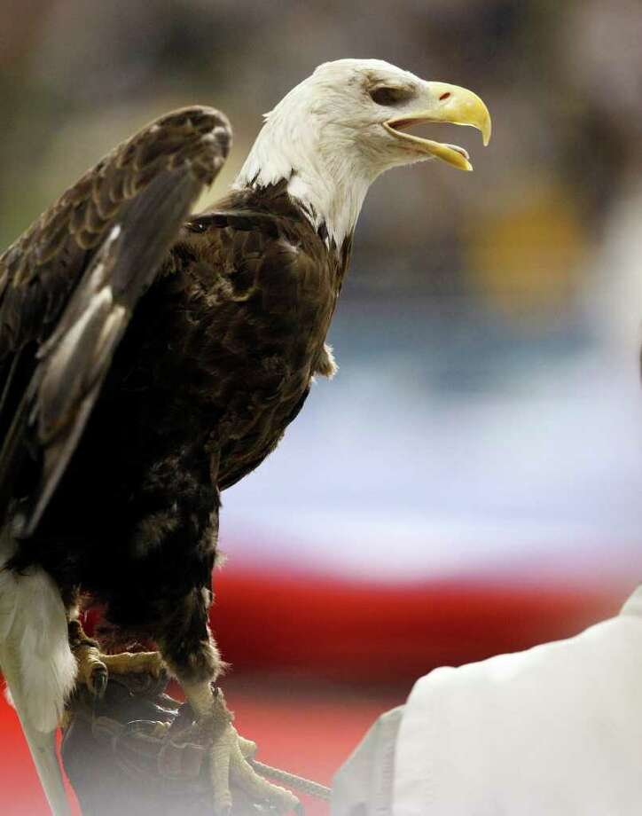 A bald eagle makes an appearance while the national anthem is sung before the Alamo Bowl college football game between Baylor and Washington, Thursday, Dec. 29, 2011, at the Alamodome in San Antonio. Photo: AP