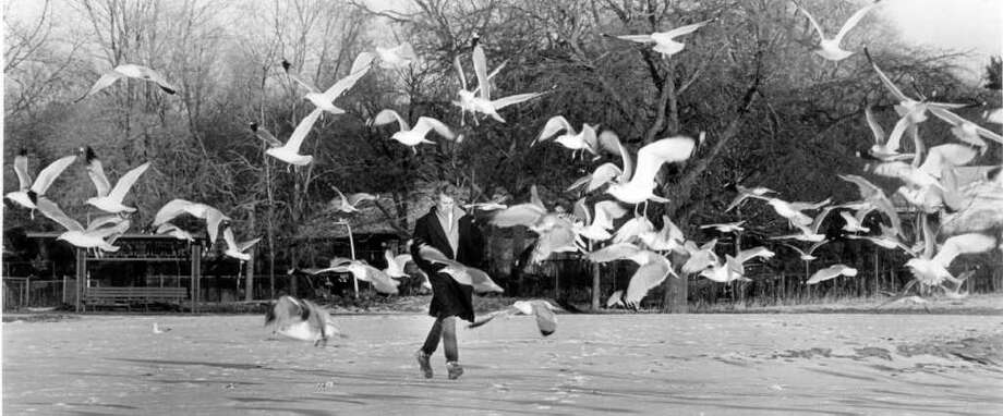 Jan. 5, 1987: Tim Barker of Stamford sends some seagulls flying as he walks along Cummings Beach. Photo: File Photo