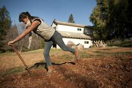 More young people going into farming could help brighten the food outlook for 2012.  Young farmer Molly Nakahara loosens the soil for a future crop at Dinner Bell Farm in Grass Valley on Wednesday, Dec. 21, 2011.
