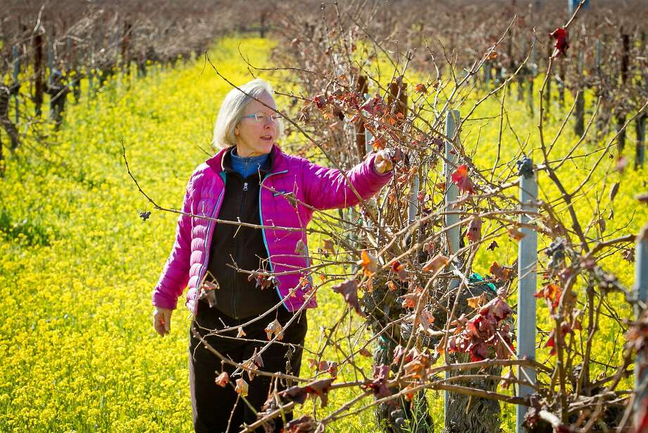 Cathy Corison inspects Cabernet vines in her Kronos vineyard in St. Helena. Corison has been a proponent of organic farming since buying Kronos in 1995. Photo: John Storey, Special To The Chronicle