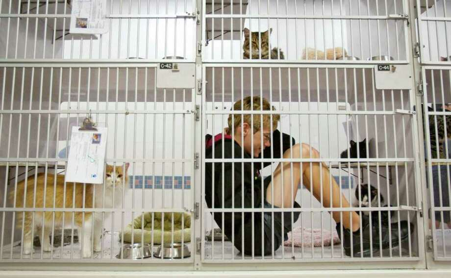 Dec. 19, 2011 | Triston Katic, 12, of Houston, spends some time with a kitten in it's cage during the SPCA's winter 'Critter Camp' in Houston. Photo: Nick De La Torre, Houston Chronicle / © 2011  Houston Chronicle