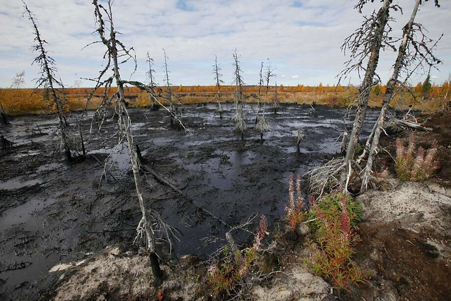 This Saturday, Sept. 10, 2011 photo shows dying trees next to an oil spill near the town of Usinsk, 1500 kilometers (930 miles) northeast of Moscow. Komi is one of Russia's largest and oldest oil provinces but ruptures in aging pipelines and leaks from decommissioned oil wells make oil spills in the region routine. Environmentalists estimate at least 1 percent of Russia's annual oil production, or 5 million tons (35 million barrels), is spilled every year. That's equivalent to one Deepwater Horizon-scale leak about every two months. Crumbling infrastructure and a harsh climate combine to spell disaster in the world's largest oil producer, responsible for 13 percent of global output. (AP Photo/Dmitry Lovetsky) Photo: Dmitry Lovetsky, Associated Press