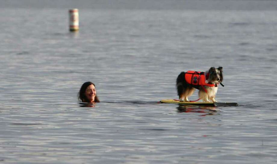 A pup floats on Lake Washington during the annual Polar Bear Plunge at Matthews Beach in Seattle on Sunday. Photo: JOSHUA TRUJILLO / SEATTLEPI.COM