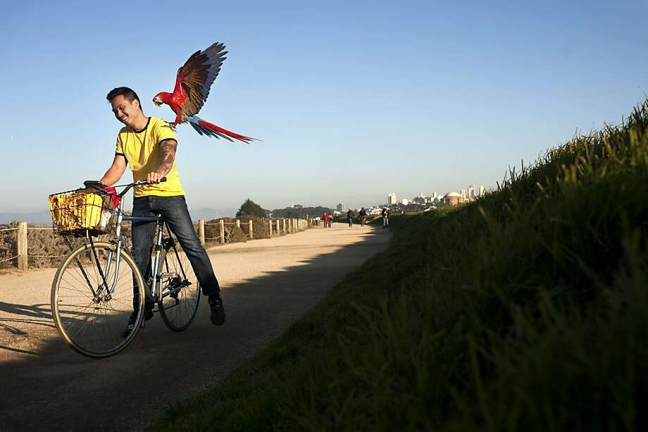 Chan Quach takes his pet Macaws, Rudy and Bella, out for a flight exercise at Crissy Field on Friday, December 9, 2011 in San Francisco, Calif. He takes his birds out at least once a week. He says that training a parrot is similar to training a toddler, with time and patience they learn how to interact with their surroundings. Photo: Dania Maxwell, Special To The Chronicle