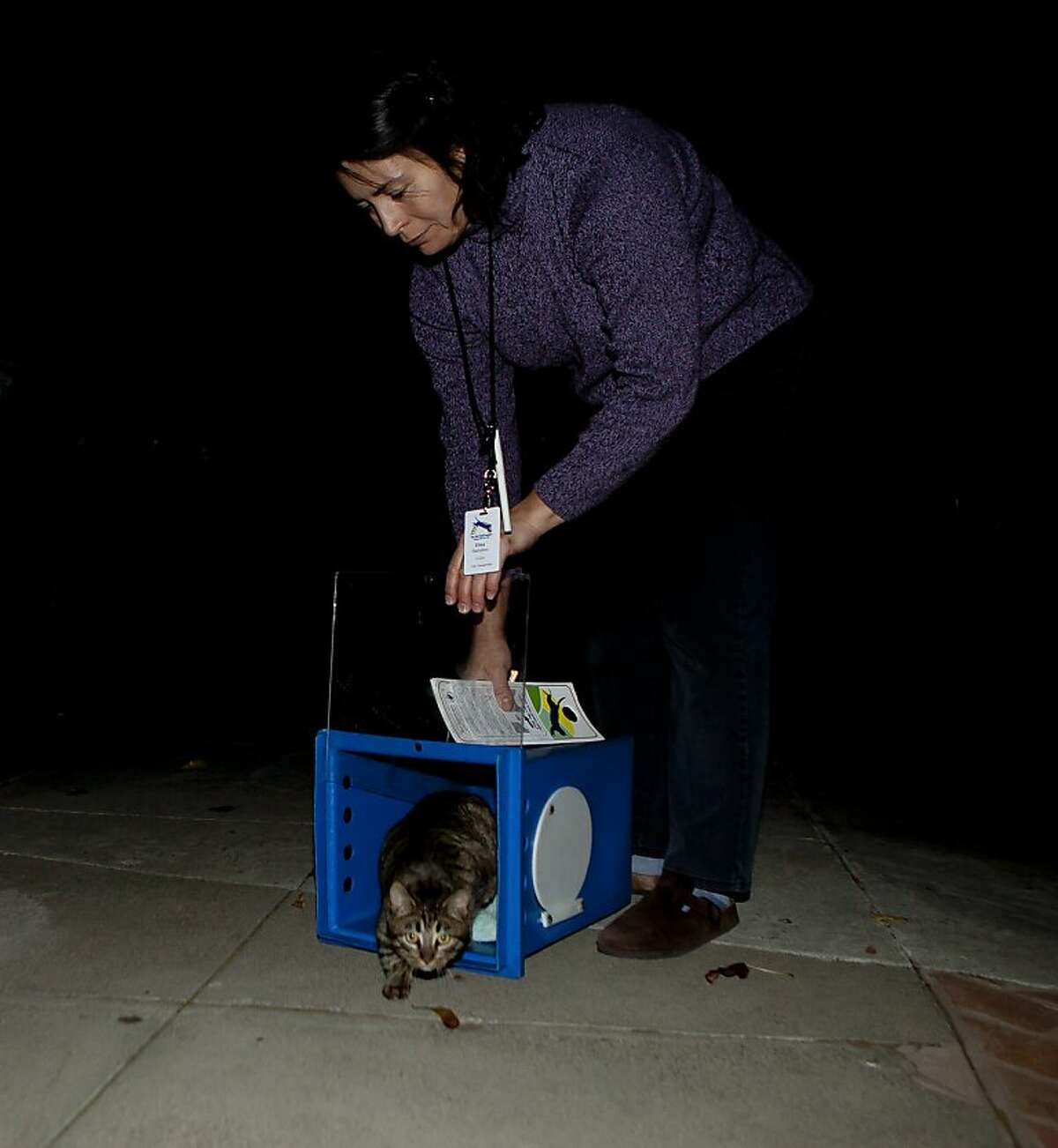 Elisa Hamilton, volunteer of Town Cats, releases a kitten back to her downtown neighborhood after she was spayed at the San Jose Animal Shelter on Wednesday, December 21, 2011 in San Jose, Calif. Feral cats are being captured, neutered or spayed, micro-chipped then released back to the streets under a new program called Feral Freedom, adopted by the City of San Jose.