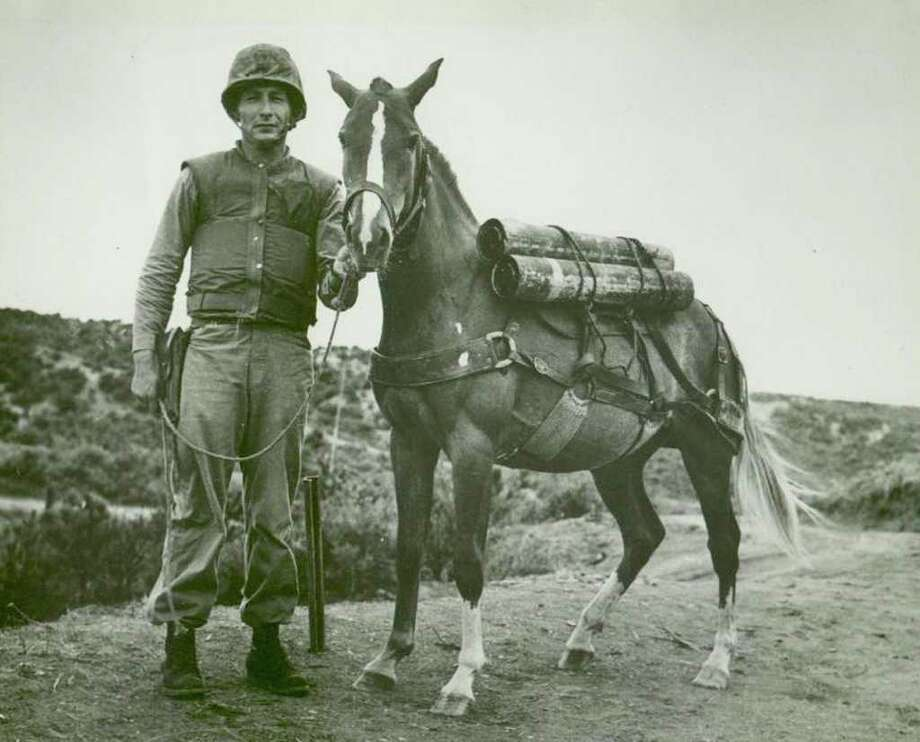 Sgt. Joseph Latham of the 5th Marines' Recoilless Rifle Platoon stands with Reckless, whom he trained to pack ammunition up hills to the front lines and carry the wounded back down during the Korean War. Photo: COURTESY NANCY LATHAM PARK / THE WASHINGTON POST