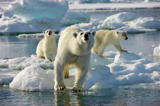 "In this undated image released by Discovery Channel, a mother polar bear and two cubs are shown during the filming of Discovery Channel's documentary series ""Frozen Planet,"" premiering March 18, 2012. The series will encompass seven episodes including a program on climate change hosted by David Attenborough. Photo: AP"