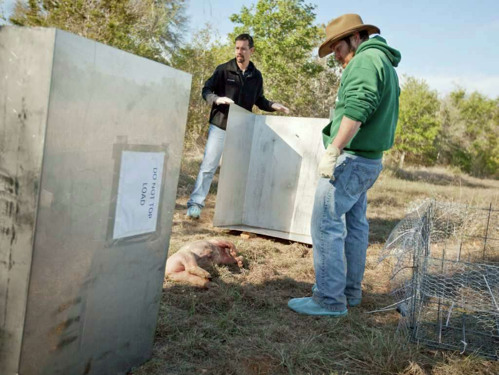 Corpses waste away at Hill Country \'farm\' - San Antonio Express-News