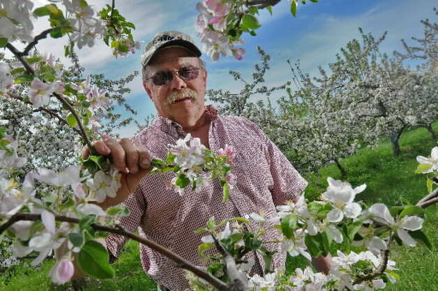 Ed Miller, president of Goold Orchards in Castleton-on-Hudson, Rensselaer County, checks on his apple blossoms in the spring of 2008.