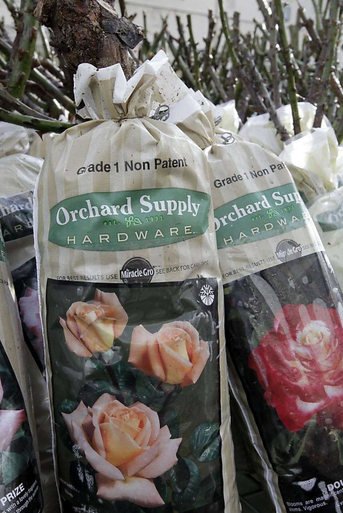 Rose plants on display for sale at Orchard Supply Hardware store in Mountain View, Calif., Tuesday, Jan. 3, 2012.