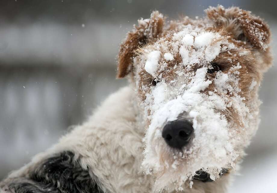 OK, who threw the snowball?I feel like biting someone. (Oberhof, Germany.) Photo: Robert Michael, AFP/Getty Images