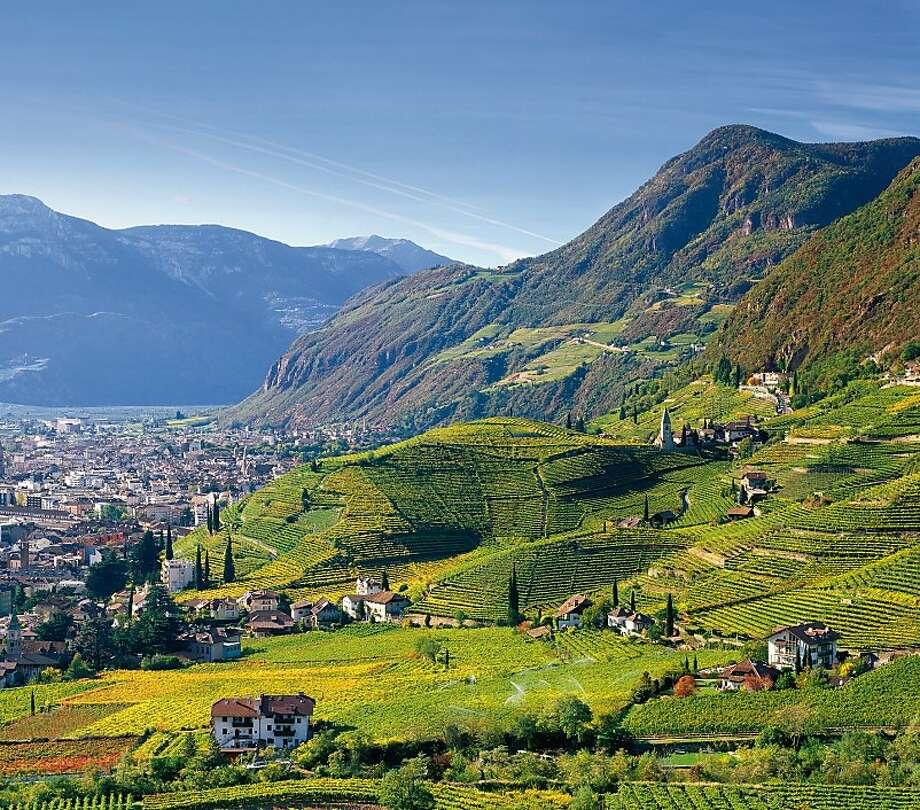 Vineyards in Santa Maddalena, above the town of Bolzano in the Alto Adige region of Italy, which recalls neighboring Austria. Photo: Eos