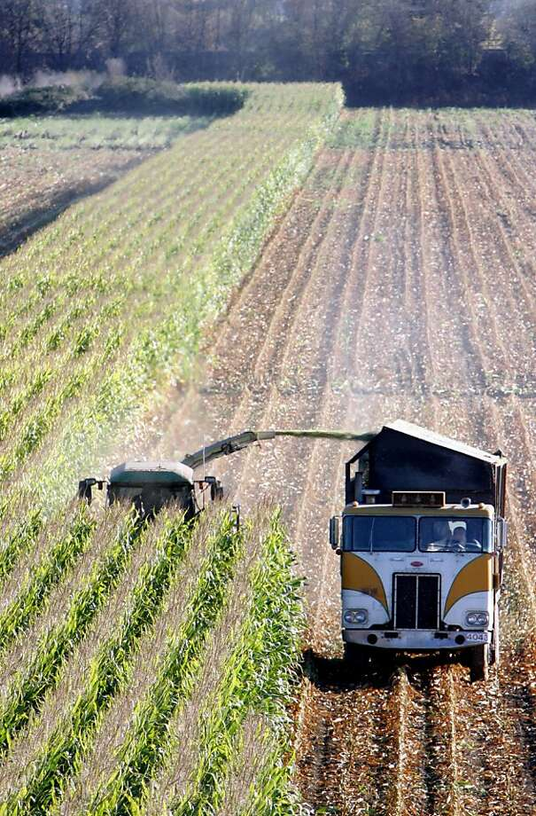 FILE - In this Oct. 31, 2005, file photo, a harvester works through a field of genetically modified corn near Santa Rosa, Calif. So-called Bt corn, genetically engineered to make its own insecticide, may be losing its distinctive ability to kill pests _ a possible result of careless farming practices that could give rise to resistant bugs and threaten the future of one of the nation's most widely planted crops. (AP Photo/Rich Pedroncelli, File) Photo: Rich Pedroncelli, Associated Press