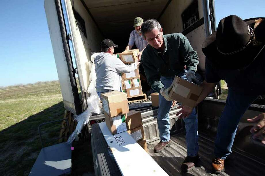 Rick Sramek, center, district supervisor with Texas AgriLife Extension Wildlife Services, loads fox and coyote rabies vaccine pellets in Zapata last week that are to be dropped from the air over West Texas. Photo: JERRY LARA / SAN ANTONIO EXPRESS-NEWS